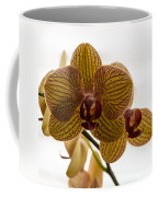 Red Veined Orchid Coffee Mug