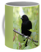 Red-winged Blackbird Coffee Mug by Doris Potter