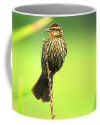 Red Winged Blackbird Female Coffee Mug