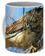 Redtail Among Branches Coffee Mug