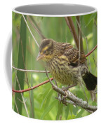Redwing Blackbird - Immature Coffee Mug