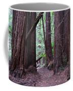 Redwood Grove Coffee Mug