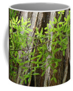 Redwood Tree Art Prints Baslee Troutman Coffee Mug