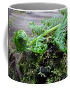 Redwood Tree Forest Fern Art Prints Ferns Giclee Baslee Trouman Coffee Mug