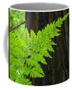 Redwood Tree Forest Ferns Art Prints Giclee Baslee Troutman Coffee Mug