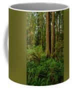 Redwoods And Ferns Coffee Mug
