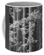 Redwoods Ir 0625 Coffee Mug