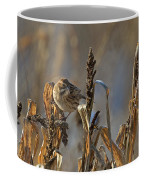 Reed Bunting Coffee Mug