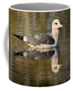 Young Gull Reflections Coffee Mug