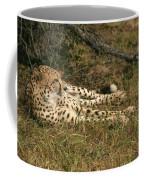 Resting Cheetah Coffee Mug