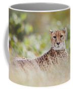 Resting Cheetah Coffee Mug by Nick Biemans