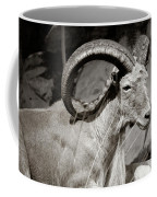 Resting Ram Coffee Mug