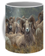 Resting Rams Coffee Mug