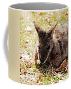 Resting Wallaby Coffee Mug