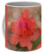 Rhododendrum Oldhamii Coffee Mug