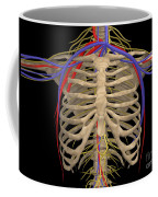 Rib Cage With Nerves, Arteries Coffee Mug