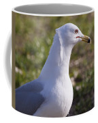Ring-billed Gull Coffee Mug
