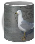Ring-billed Gull Coffee Mug