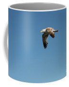 Ringed-bill Gull Coffee Mug