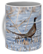 Ringneck Pheasant Rooster In Snow Coffee Mug