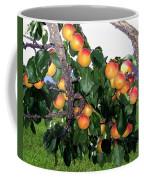 Ripe Apricots Coffee Mug