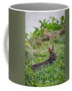 River Rabbit Coffee Mug