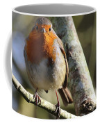 Robin On Branch Donegal Coffee Mug
