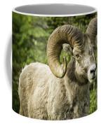 Rocky Mountain Bighorn Sheep Coffee Mug
