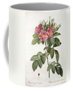 Rosa Carolina Corymbosa Coffee Mug by Pierre Joseph Redoute