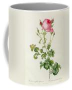Rosa Centifolia Bipinnata Coffee Mug