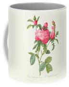 Rosa Centifolia Prolifera Foliacea Coffee Mug by Pierre Joseph Redoute