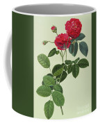 Rosa Holoferica Multiplex Coffee Mug