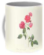 Rosa Indica Caryophyllea Coffee Mug by Pierre Joseph Redoute