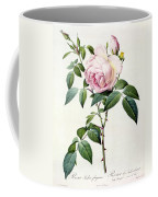 Rosa Indica Fragrans Coffee Mug by Pierre Joseph Redoute