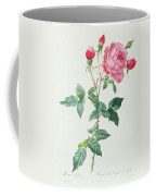 Rosa Indica Coffee Mug by Pierre Joseph Redoute