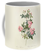 Rosa Multiflora Carnea Coffee Mug