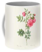 Rosa Pimpinellifolia Flore Variegato  Coffee Mug by Pierre Joseph Redoute