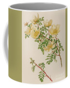 Rosa Spinosissima Var Hispida Coffee Mug