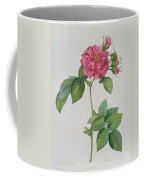 Rosa Turbinata Coffee Mug by Pierre Joseph Redoute