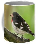 Rose-breasted Grosbeak Male Perched New Jersey  Coffee Mug