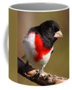 Rose-breasted Grosbeak Squared Coffee Mug