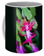 Rose-colored Christmas Cactus At Pilgrim Place In Claremont-california  Coffee Mug