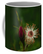 Rose Stages Coffee Mug