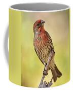Rosy Finch Macro Coffee Mug
