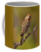 Rosy Finch Posing I Coffee Mug