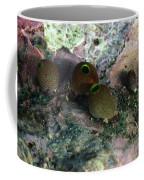 Round Bulb, Didemnum Molleb Tunicates Coffee Mug