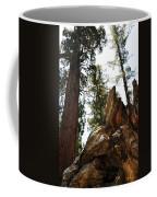 Round Meadow Giant Sequoia Coffee Mug