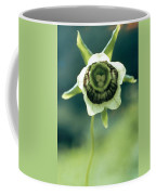 Roundleaf Asiabell Coffee Mug