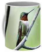 Ruby Throated Hummingbird 5 Art Print By Christina Rollo