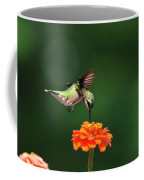 Ruby Throated Hummingbird Feeding On Orange Zinnia Flower Coffee Mug by Christina Rollo